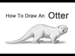 Видео урок: как нарисовать Выдру простым карандашом