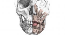 Видео урок как правильно рисовать губы человека