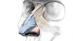 Видео урок как правильно рисовать нос человека