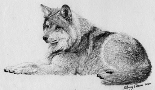 рисунки карандашом животных для начинающих: