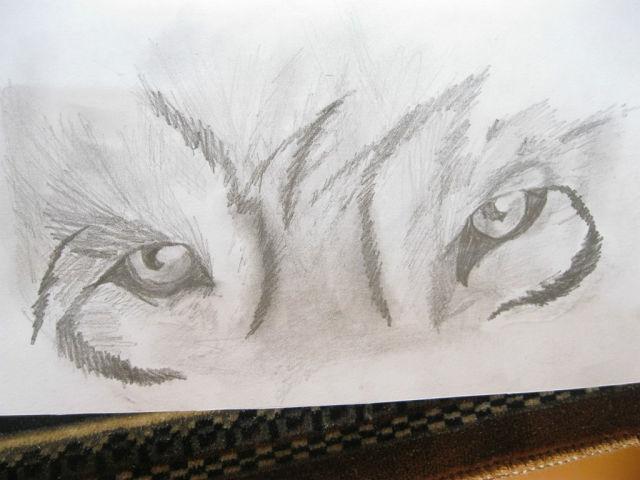 Как нарисовать взгляд волка простым ...: fwallpapert.pp.ua/kartinki-prostym-karandashom-poetapno.html