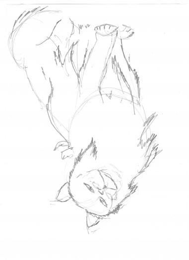 Как нарисовать кошку породы турецкая