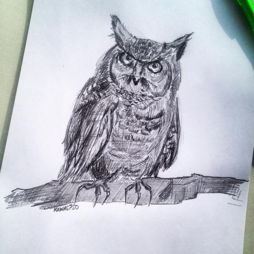 Как нарисовать реалистичную сову карандашом поэтапно