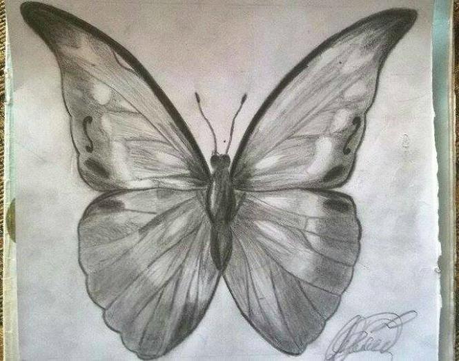 Как нарисовать бабочку morpho anaxibia