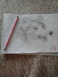 Фото Волчица 9 к уроку