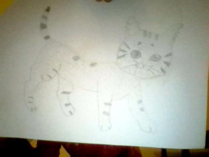 Фото кошка к уроку