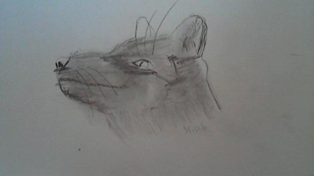 Фото foxi к уроку
