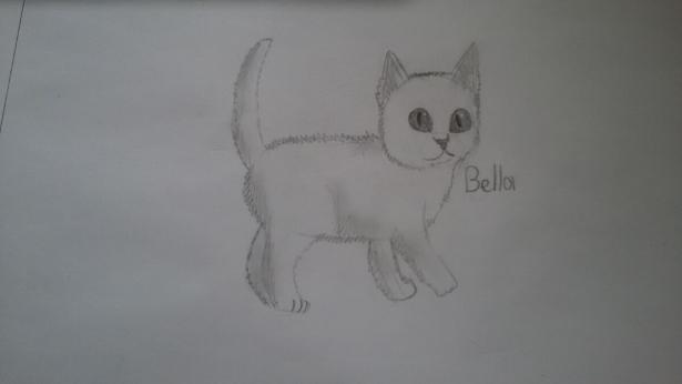 Фото Bella-The-Cat к уроку