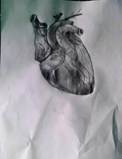 Как нарисовать человеческое сердце