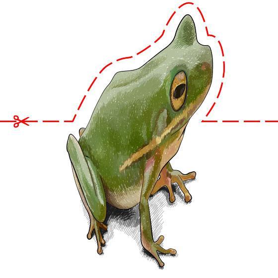 Рисуем лягушку в 3D на бумаге шаг за шагом - шаг 10