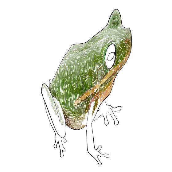 Рисуем лягушку в 3D на бумаге шаг за шагом - шаг 4