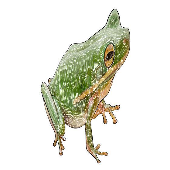 Рисуем лягушку в 3D на бумаге шаг за шагом - шаг 5