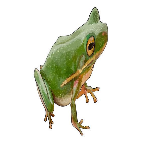 Рисуем лягушку в 3D на бумаге шаг за шагом - шаг 6