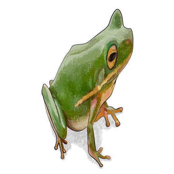 Рисуем лягушку в 3D на бумаге шаг за шагом - шаг 7