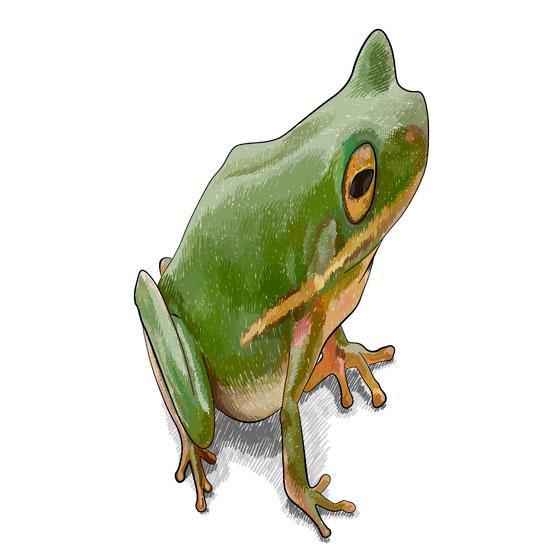 Рисуем лягушку в 3D на бумаге шаг за шагом - шаг 8