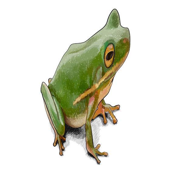 Рисуем лягушку в 3D на бумаге шаг за шагом - шаг 9