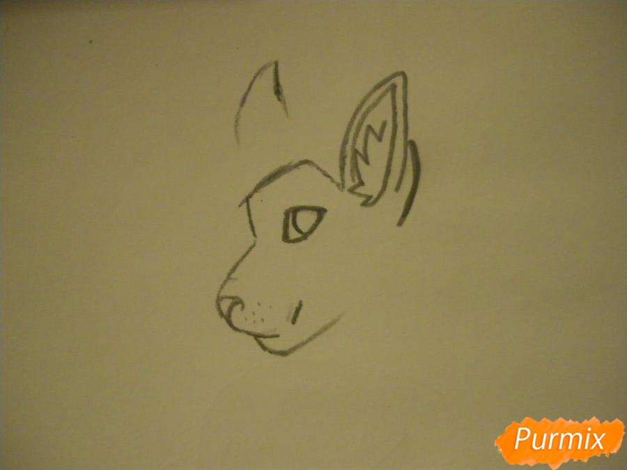Рисуем дикого кота с коричневым окрасом - шаг 2