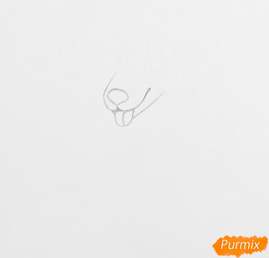 Рисуем трёхцветного аниме лиса с ошейником и с серёжками в ушах - шаг 1