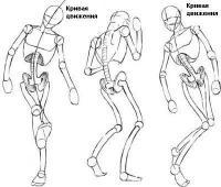Тело аниме персонажей общие принципы