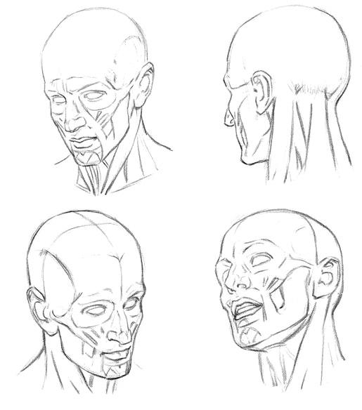 Принцип работы мышц для рисования - шаг 1