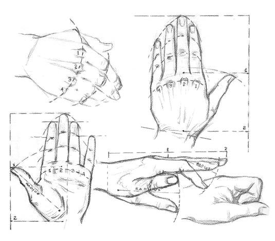 Как рисовать пропорции рук человека - шаг 1