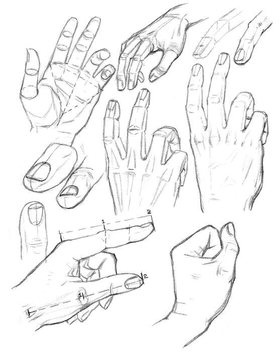 Как рисовать пропорции рук человека - шаг 2