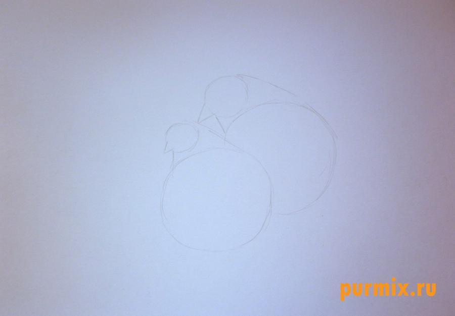 Рисуем двух голубей на 14 февраля цветными карандашами - шаг 1