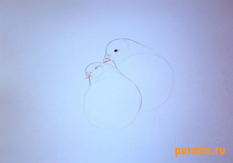 Рисуем двух голубей на 14 февраля цветными карандашами - шаг 2