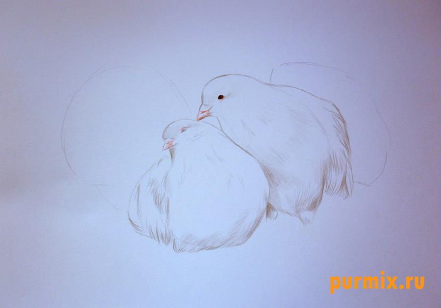 Рисуем двух голубей на 14 февраля цветными карандашами - шаг 3