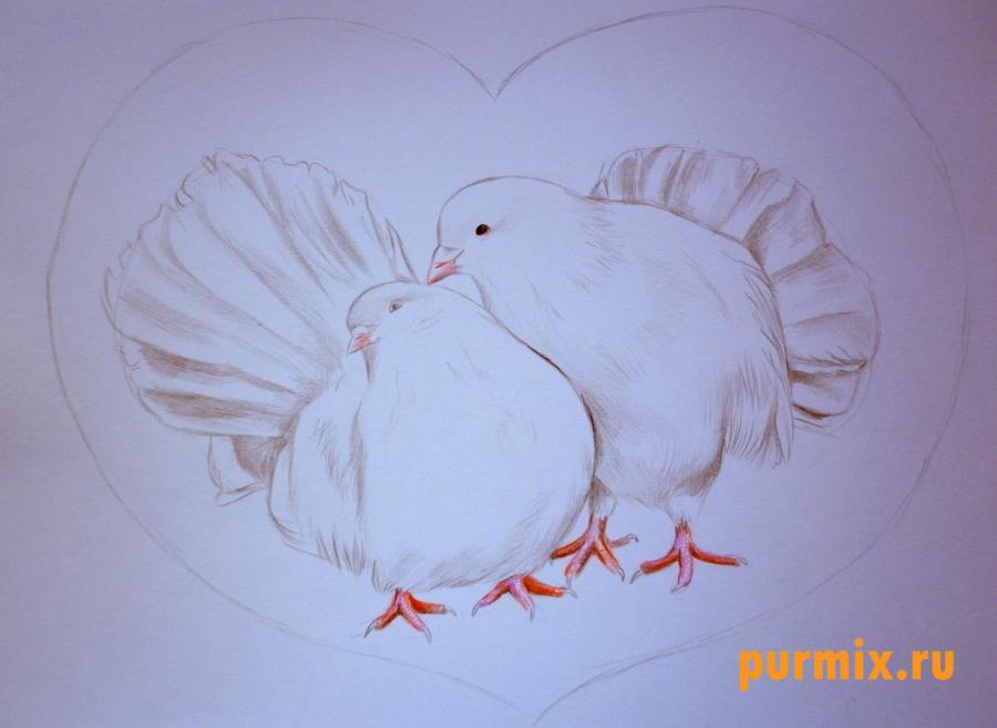 Рисуем двух голубей на 14 февраля цветными карандашами - шаг 5