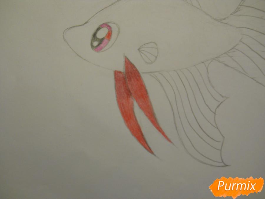 Рисуем и раскрасить рыбку ребёнку - шаг 5
