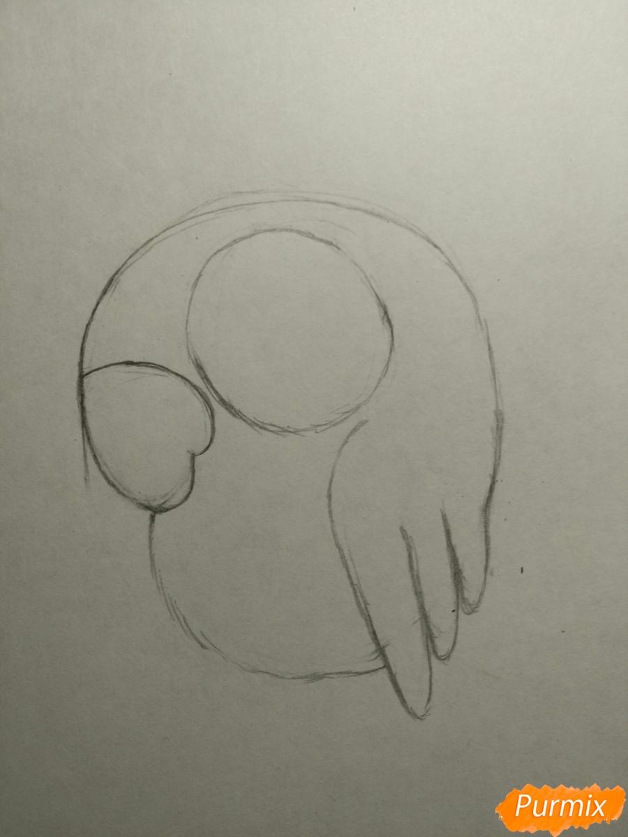 Рисуем попугайчика для ребенка карандашами - шаг 3