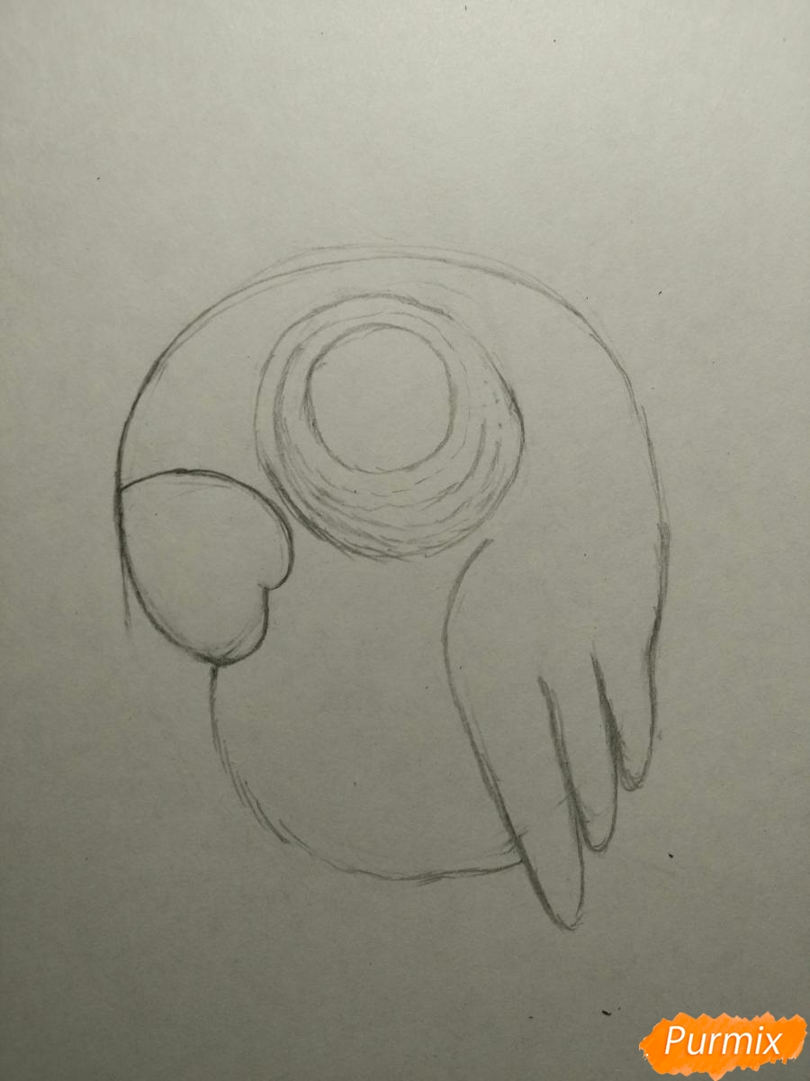 Рисуем попугайчика для ребенка карандашами - шаг 4