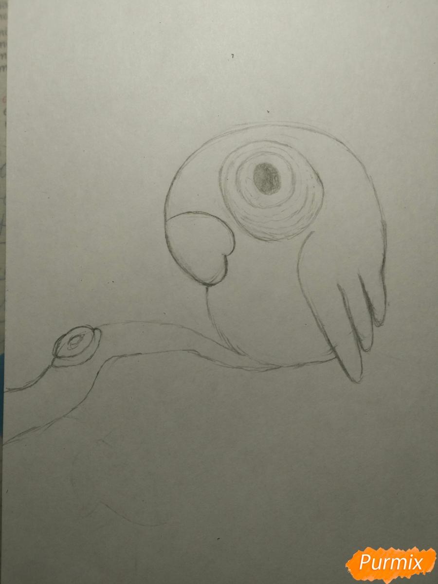 Рисуем попугайчика для ребенка карандашами - шаг 6