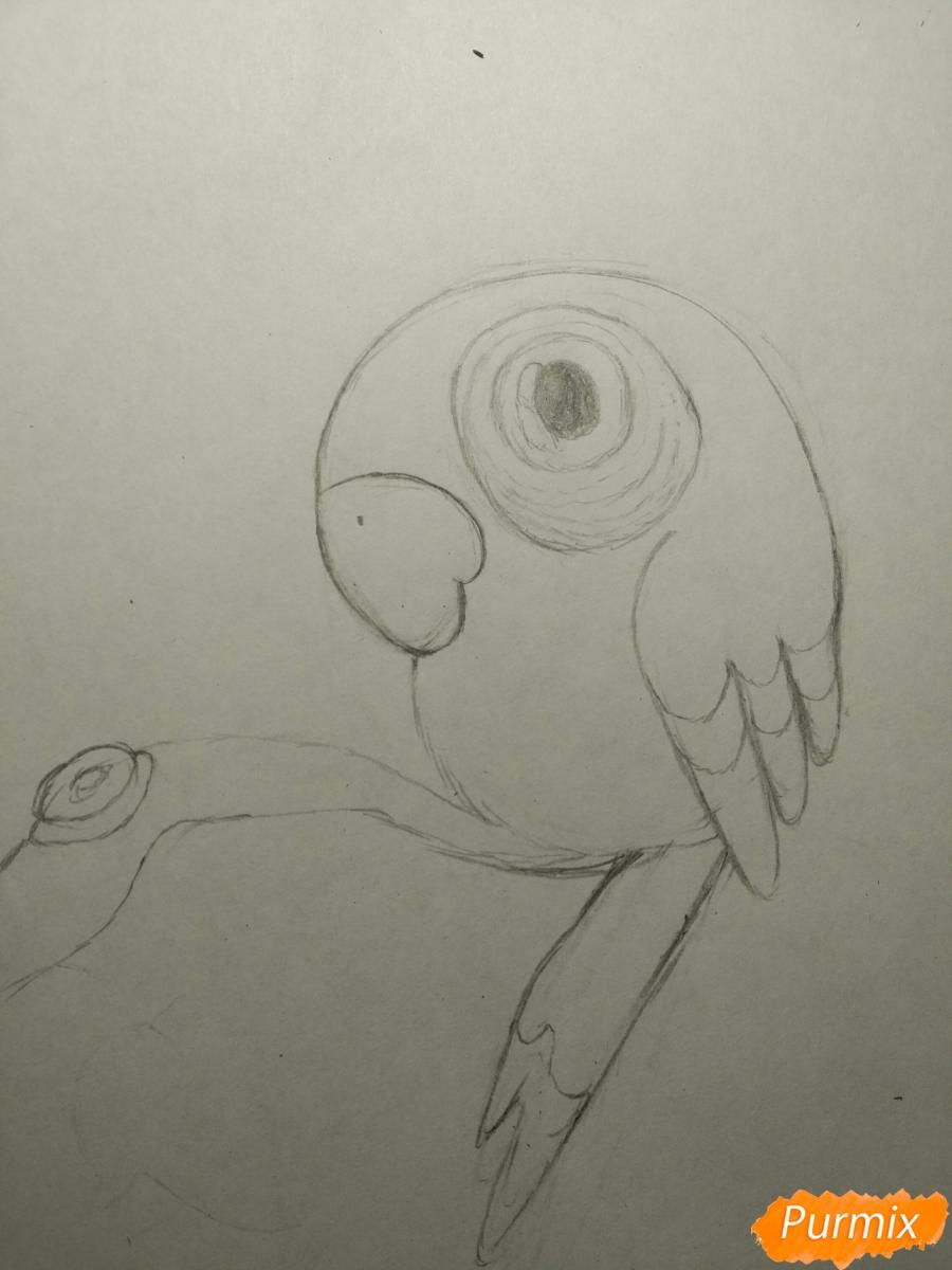 Рисуем попугайчика для ребенка карандашами - шаг 7