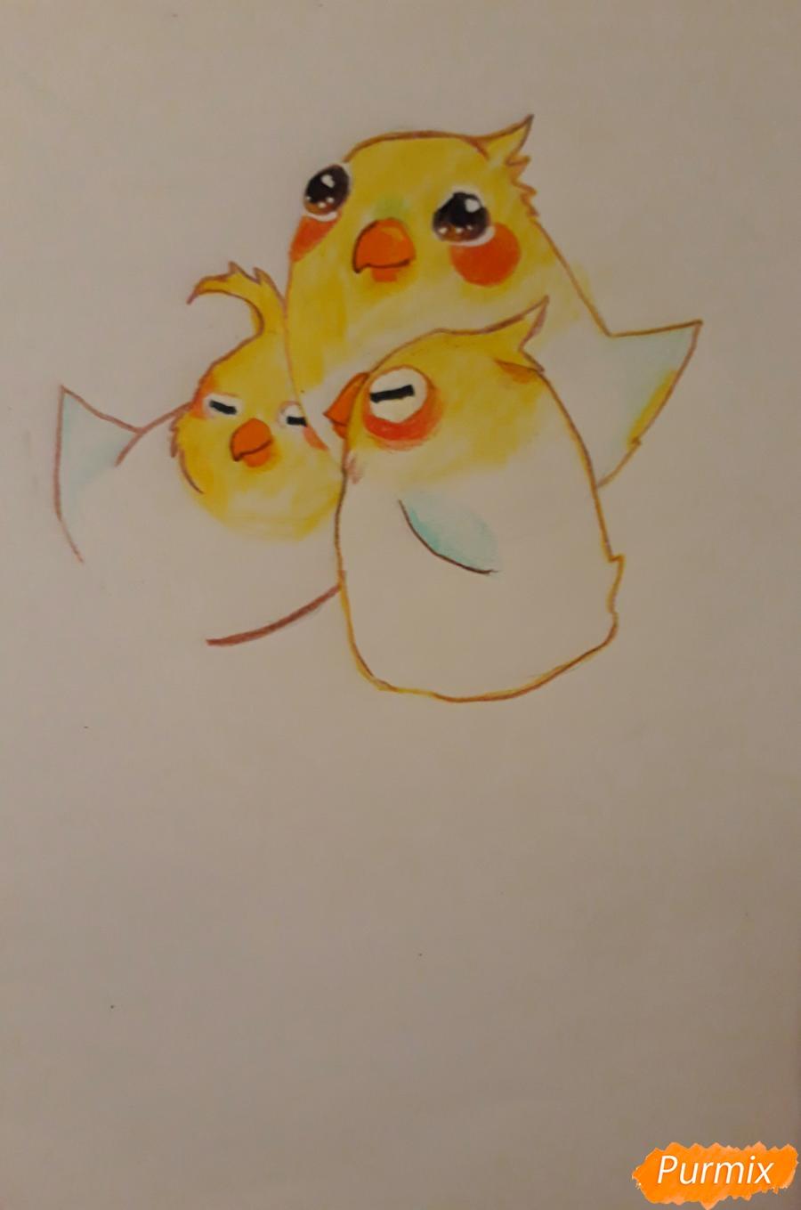 Рисуем трех милых попугайчиков карандашами - шаг 11