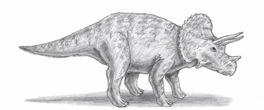 Как шаг за шагом нарисовать трицератопса в полный рост - шаг 6