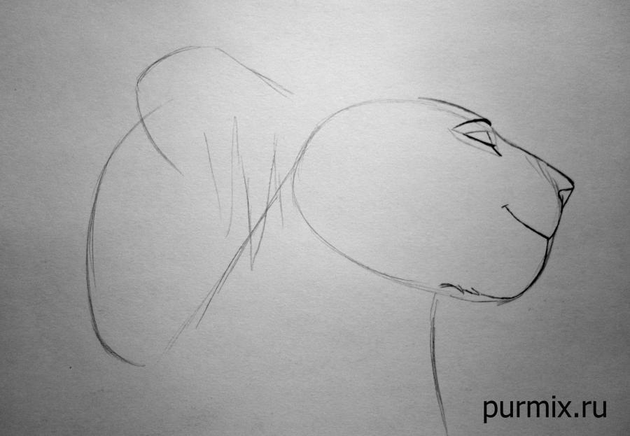 Рисуем взрослых Симбу и Налу из Король Льва 2 - шаг 2