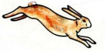 Рисуем зайца в беге - шаг 5