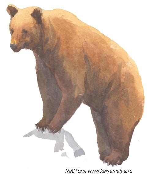 Учимся рисовать. Медведь