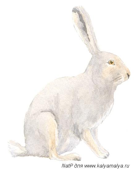 Рисуем зайца - шаг 4