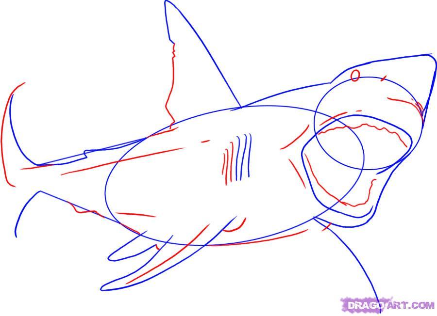 Рисуем акулу карандашами - шаг 3