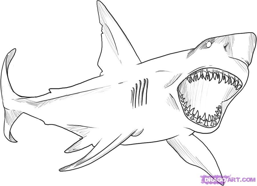 Рисуем акулу карандашами - шаг 5