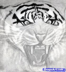 Учимся рисовать голову тигра с открытым ртом - шаг 10