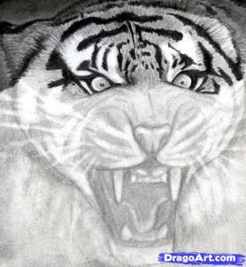 Учимся рисовать голову тигра с открытым ртом - шаг 11