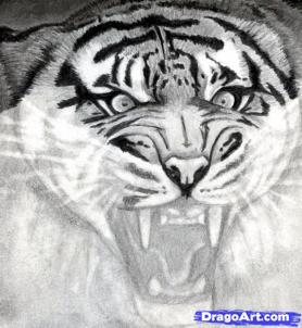 Учимся рисовать голову тигра с открытым ртом - шаг 12