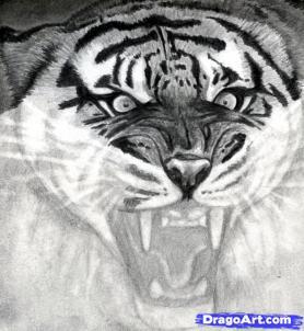 Учимся рисовать голову тигра с открытым ртом - шаг 13