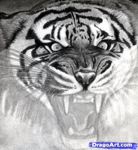 Учимся рисовать голову тигра с открытым ртом - шаг 14