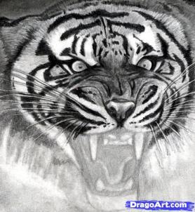 Учимся рисовать голову тигра с открытым ртом - шаг 15