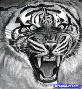 Учимся рисовать голову тигра с открытым ртом - шаг 17